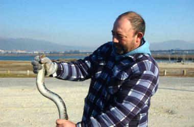 pescador de lampreia