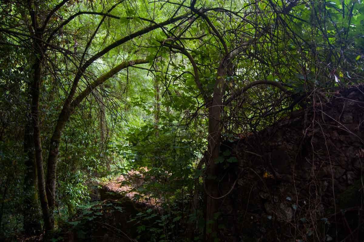 Túnel de verde