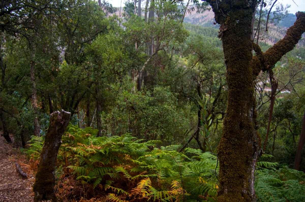 Árvores e fetos tornam o vale especial