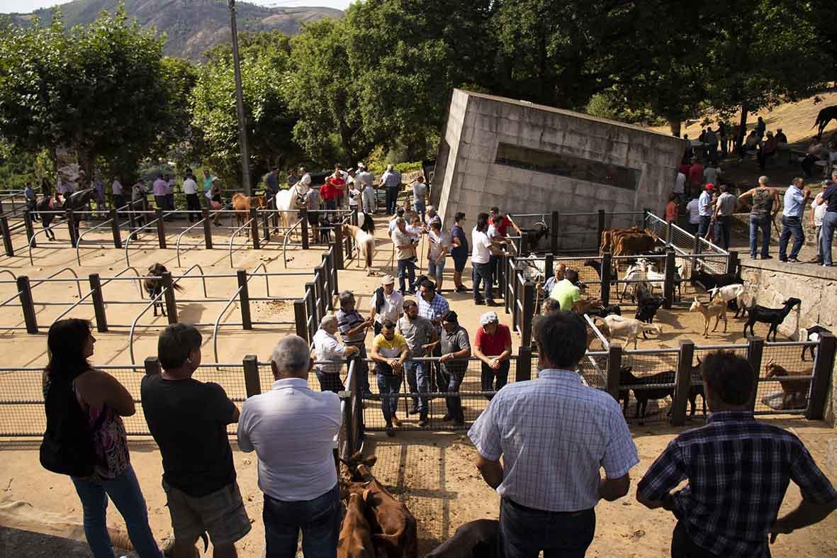 Garranos, cachenas e cabras à venda
